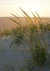 Gold Beach Grass Sunrise Chincoteague VA