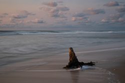 stump of a small tree caught in the waves at sunrise in chincoteague virginia