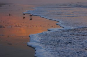 sea foam at sunrise as birds comb the shoreline for food