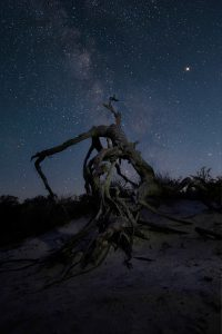 dead tree branch with milky way galaxy in the background