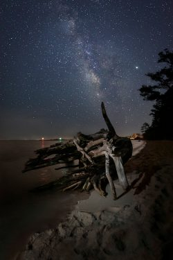 driftwood beach at night stars milky way