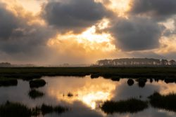 sunrise marsh still water fog