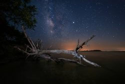 fallen tree in the water at night with stars