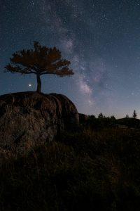 tree on hill night sky stars milkyway